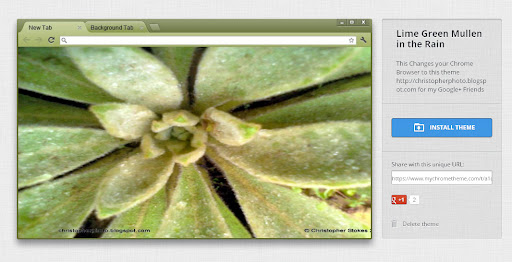 Lime Green Mullen in the Rain – My Chrome Theme | DARK AT HEART